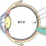 ryokunaisyo-1-1
