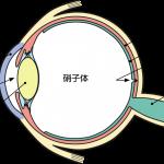 ryokunaisyo-1