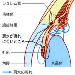 ryokunaisyo-5